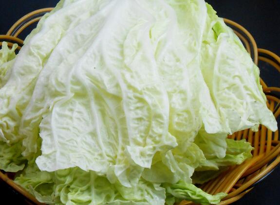 胰腺炎吃白菜好