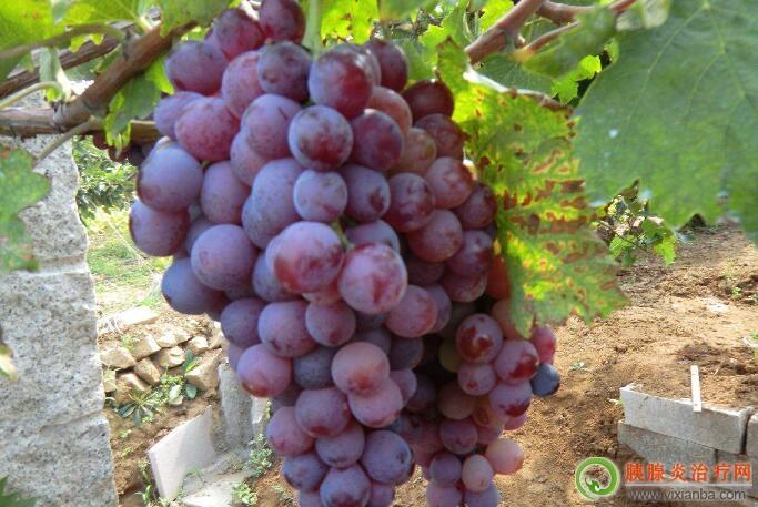 胰腺炎可以吃玫瑰香葡萄吗