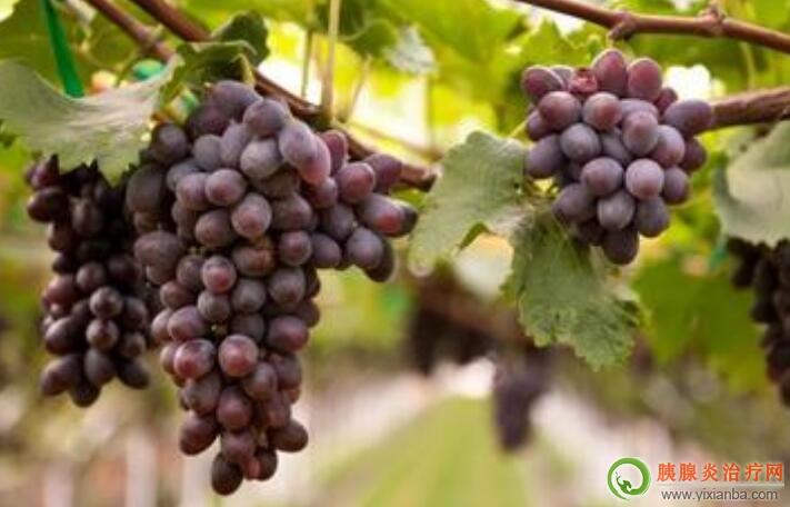 胰腺炎可以吃巨峰葡萄吗
